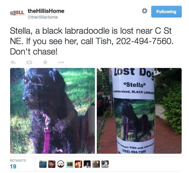 Flyer of Stella the Dog.