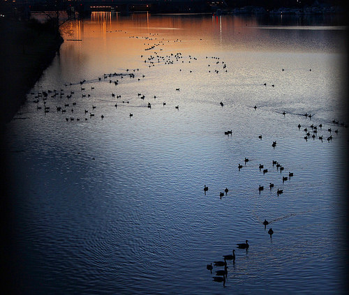 Geese and Anacostia sunset