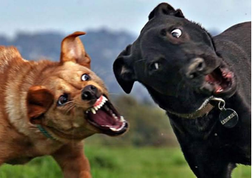 The Hill is Home   Dealing with dog fights: The best advice I hope
